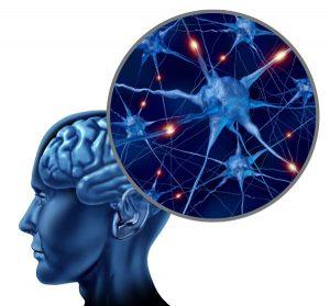 idegrendszer-agy-neuronok